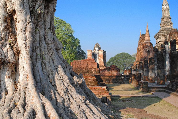寺院の左部の写真。たくさんの樹木も生い茂っている。