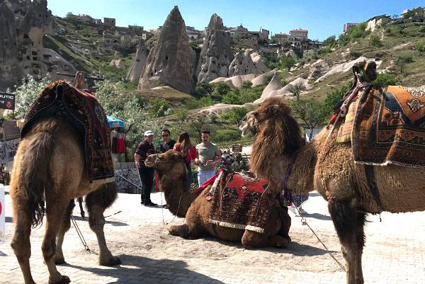 ラクダと奇岩の景観