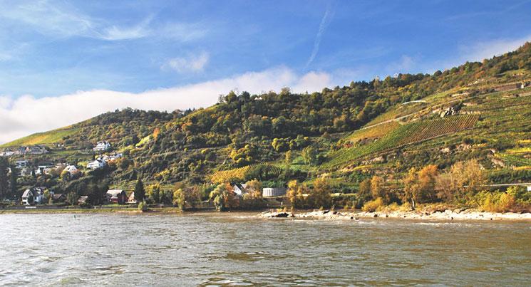 ライン川とブドウ畑の景観
