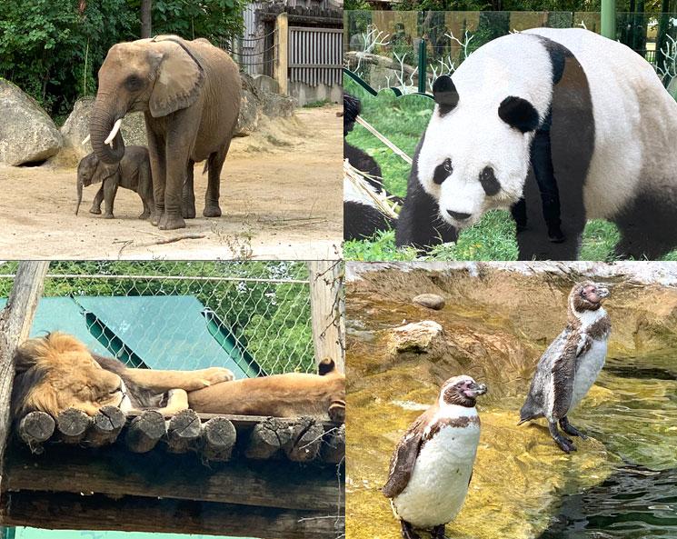 シェーンブルン動物園の動物(像、パンダなど)