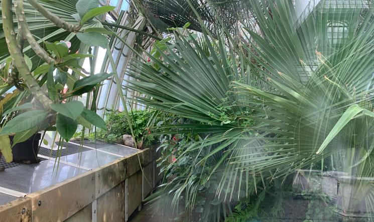 温室内の植物